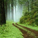 Dia de Proteção as Florestas