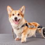 Carli Davidson: Handicapped Pet Project