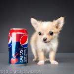 Carli Davidson: a fotógrafa de Pets