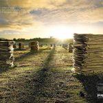 Campanha Publicitária da Prasa chama atenção para o desmatamento!
