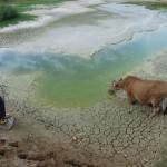 Escassez de água vai obrigar a dieta vegetariana