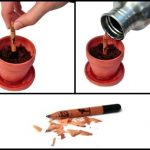 Lápis pode ser plantado quando estiver acabando