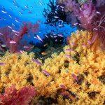 Recife dos Corais no Caribe: a Extinção de um Ecossistema Marinho