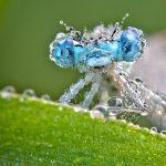Fotógrafo registra insetos 'cristalizados' na França