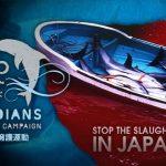 Assista AO VIVO a ação da Sea Shepherd em Taiji – Japão
