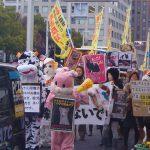 Bye Bye Fur Parade em Nagoya Japão