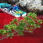Japoneses a favor da matança de golfinhos em Taiji ofendem reporter francês