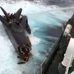 Shepherds são proibidos de aproximar de baleeiros por tribunal norte-americano
