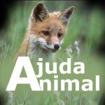 Ajuda Animal: lado a lado no ativismo no Vale do Paraíba!