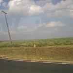 Brasil: o país do latifúndio