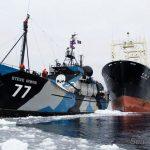 Caça as baleias – ICR suspende todas operações após ataque de navio japonês