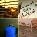 Fantástico mostra condições dos abatedouros ilegais no país