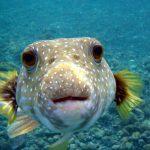 Três razões para não comer carne de peixe