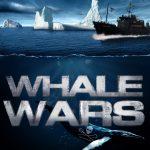 Whale Wars: começa no 2º semestre o programa da Sea Shepherd