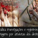 Lei criminaliza investigações de ativistas pelos direitos animais