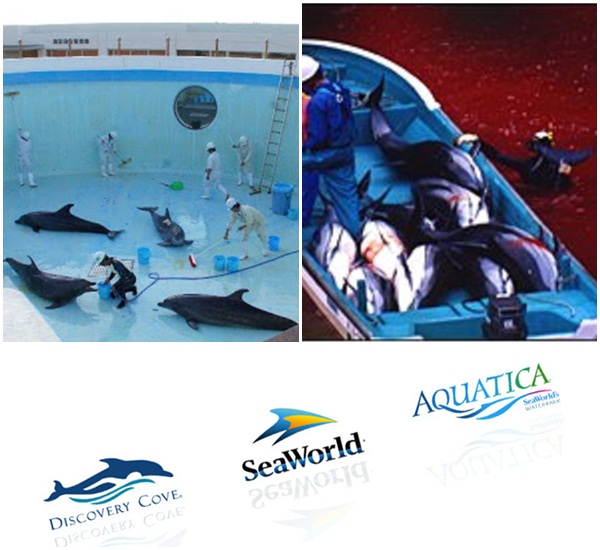 sea-world-discovery-aquario-golfinhos-baleias
