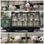 Artista Banksy faz intervenção com caminhão de matadouro