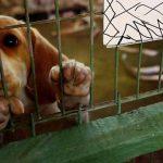 Fazenda Angolana vendia animais para o Instituto Royal