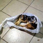 Animais não podem ser tratados como sapatos, diz promotora