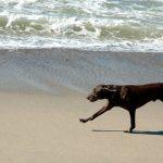Cão na praia renderá multa alta para tutores no Litoral Norte
