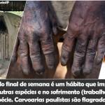 Churrascarias de São Paulo consomem carvão produzido por trabalho escravo
