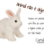 PL que proíbe testes animais para cosméticos é aprovado em São Paulo