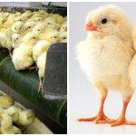 Comentários abolicionistas sobre a Segunda Sem Carne