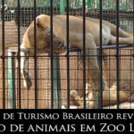 Site de Turismo Brasileiro revela abuso de animais em Zoo Luján
