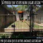 Ativistas estão acampados em frente a Zoológico da morte em Taboão
