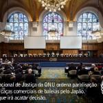 Tribunal da ONU proíbe Japão de continuar caça as baleias