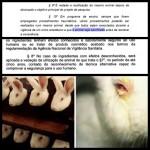 Projeto de Lei Nacional sobre testes em animais é controverso