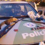 Caçadores são presos em flagrante pela polícia em Natividade da Serra