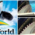 SeaWorld é eleita a empresa mais odiada dos Estados Unidos