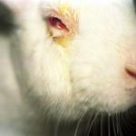 Biólogo Sérgio Greif faz análise do PL 6.602/2013 sobre testes em animais
