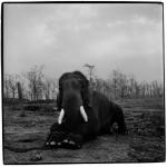 Um elefante acorrentado incomoda muita gente…
