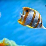 Sea Shepherd luta pelo fim do comércio de aquários no Havaí