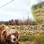 Projeto pretende camuflar humanos em Zoológicos