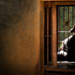 Animais em zoológicos: a noção romântica esconde a realidade