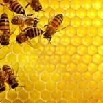 Mel: como funciona a extração e a exploração das abelhas