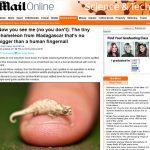 """""""Camaleãozinho"""" é descoberto em Madagascar"""