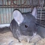 Criação de animais para extração de pele está proibida em São Paulo