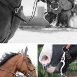 Equitação: técnica / exercício de andar a cavalo