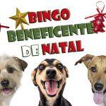 Bingo beneficente em Taubaté terá renda para cães e gatos