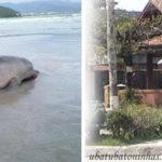 Golfinho é encontrado morto em praia de Ubatuba (SP)