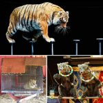 Goiás é o 11º estado brasileiro a proibir animais em circos