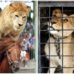 México e Holanda caminham na proibição de animais em circos