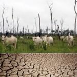 O Papel da Pecuária em nossa Crise Hídrica