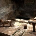 Zoológicos x Santuários: um debate necessário