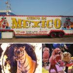 Cidade mexicana de Enseada proíbe circos com animais