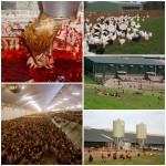 Qual o problema de consumir ovos de galinhas soltas? – Parte I